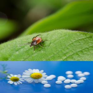 tick_on_leaf-pellets